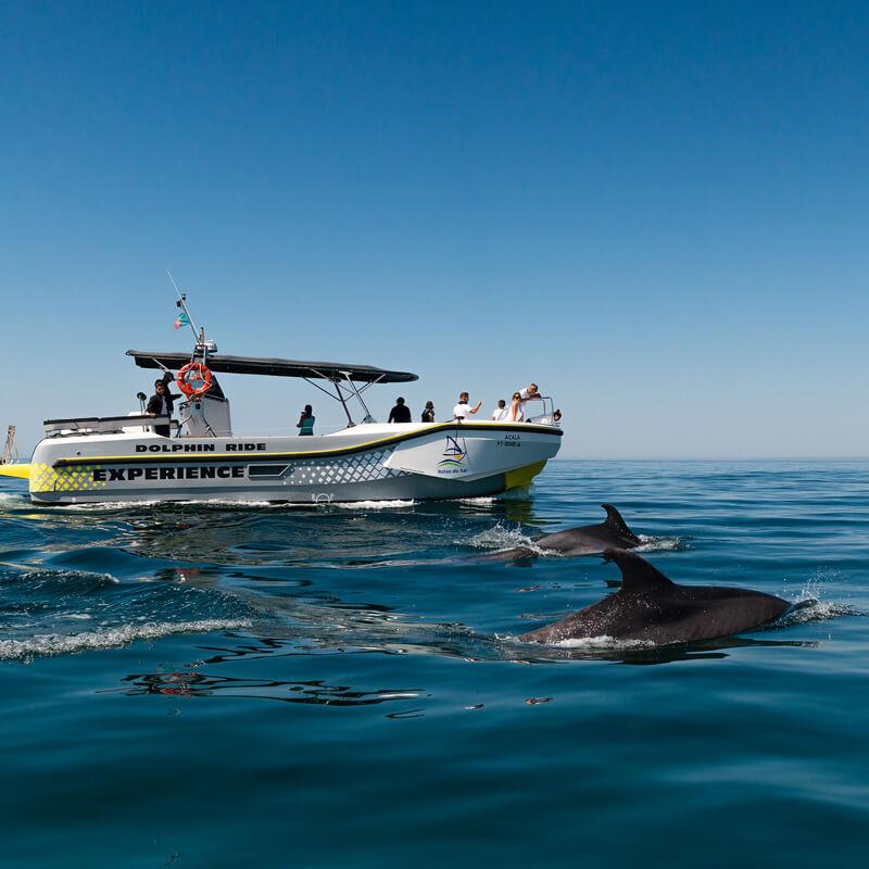 Dolphin watching, Observação de Golfinhos